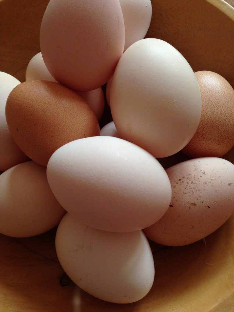 eggs source of protein